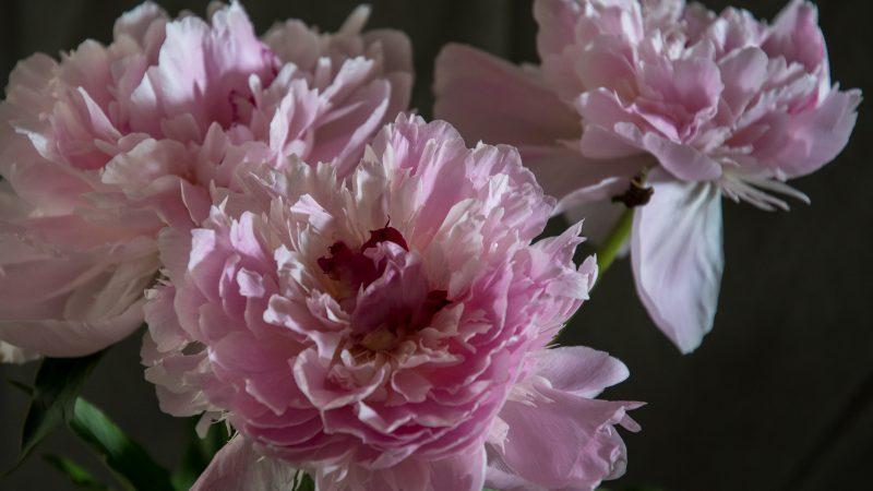 Blomster – det er den tiden