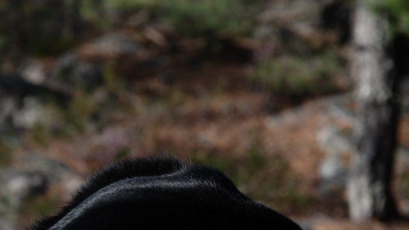 I skogen – etterpå