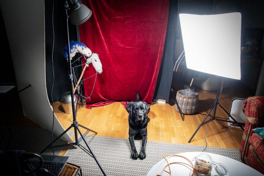 Foto: labrador Marley, Kristin B. Bruun